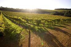 Vineyard Planning & Development