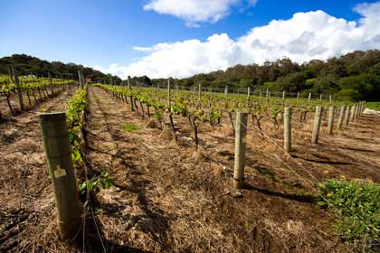 Vineyard Management at Reedy Creek